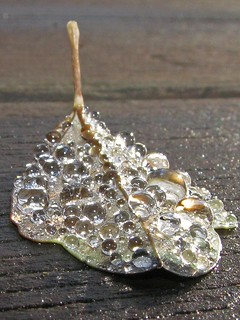 Jeweled Leaf close-up
