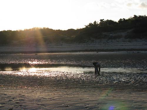 morning sun beach capecod massachusetts