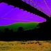 Bridge to Terabithia!