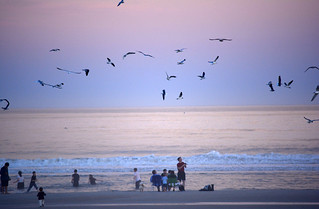 St Augustine Beach at dusk-seabirds
