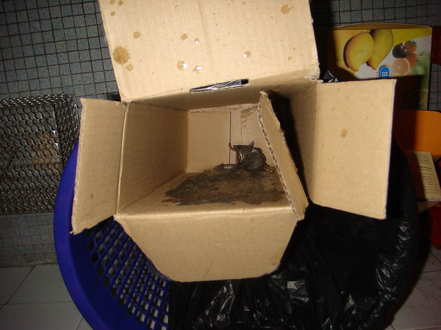 how to build an electric rat trap