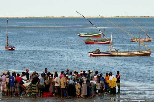Maputo, Sunday 5pm : fish arrival. Mozambique, Africa