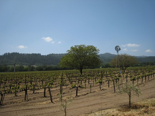 napa, calistoga, grape, vines, windmill IMG_2677