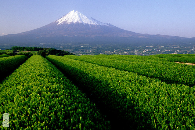 Tea fields and Mt.Fuji, Japan