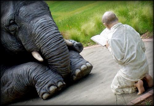 elephant learning