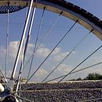 attraverso i raggi della bicicletta