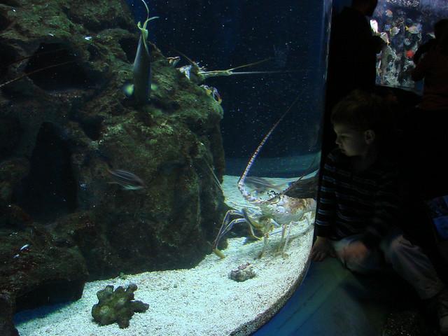 2008 03 16 Camden 026 New Jersey State Aquarium Flickr
