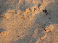 Cape Cod Sand at Sunset