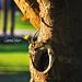 Lovely details: life, light, color & textures... / Hermosos detalles: vida, luz, colores y texturas...