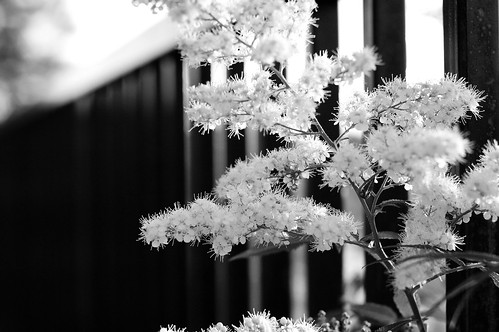 summer vacation blackandwhite bw plant nature nikon bokeh idaho 2008 mccall nikond40