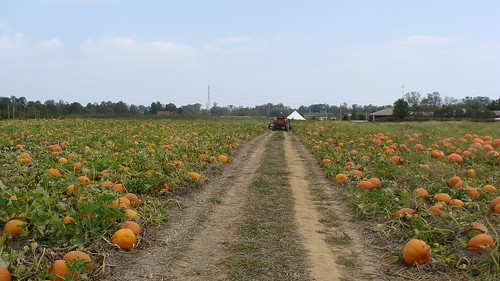 fall corn country pumpkins indiana orchard winery gourd squash hubers