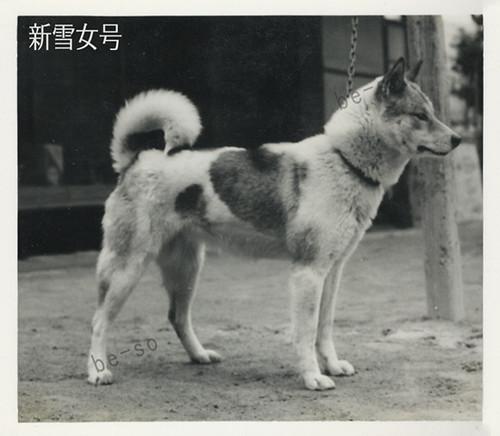 Shikoku (buchi)