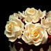 Rose close up by franjmc