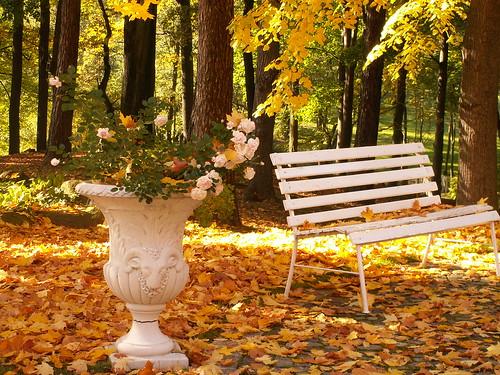 Pflanzen im Herbst neben der Bank im Schlosspark 424