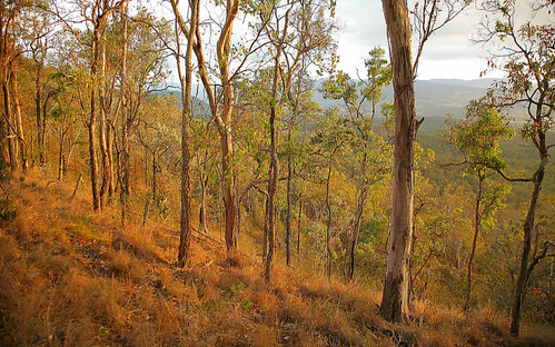 Forest Southern Queensland