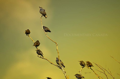 Bird Leaves