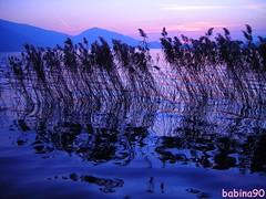I wish...I wish... by Barbara Franceschini ♥