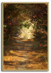 Il sentiero fatato..../ Enchanted footpath....