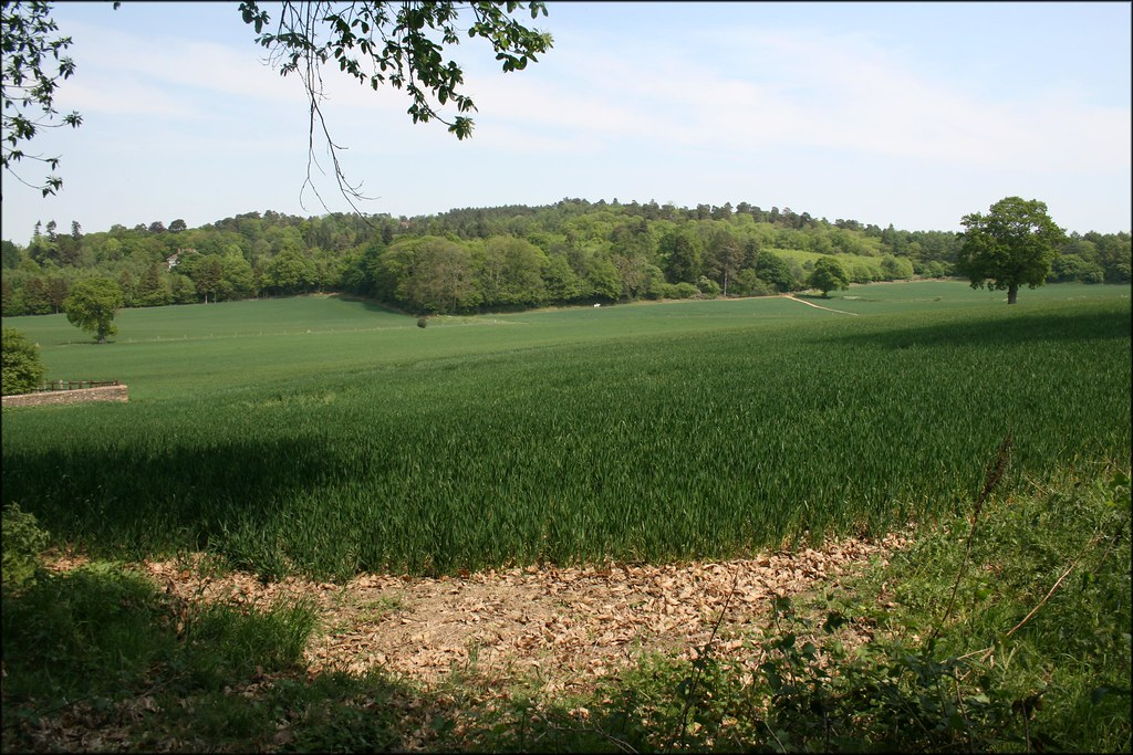 View near Hambledon
