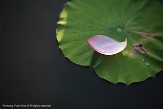 Taipei Botanical Garden, Taipei City │ May 29, 2011