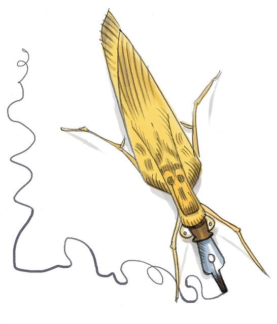 Plume-de-ma-tante moth