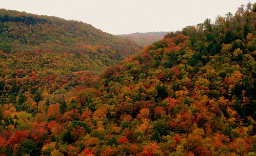 autumn trees tree fall nature landscape fantastic scenery perfect pennsylvania fallfoliage worldsend blueribbonwinner bestlandscape pennsylvaniascenery treephotos fantasticlandscape bestnature autumnscenery autumnlandscapes autumnlandscape pennsylvaniafallfoliage bestlandscapes perfectscenery pennsylvanialandscape fallfoliageinpennsylvania fallfoliageinpa pennsylvanialandscapes thebestscenery landscapedigitalphotography