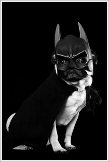 Batpug Returns