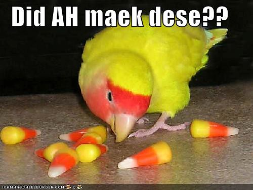 funny-pictures-bird-wonders-if-he-made-candy-corn1