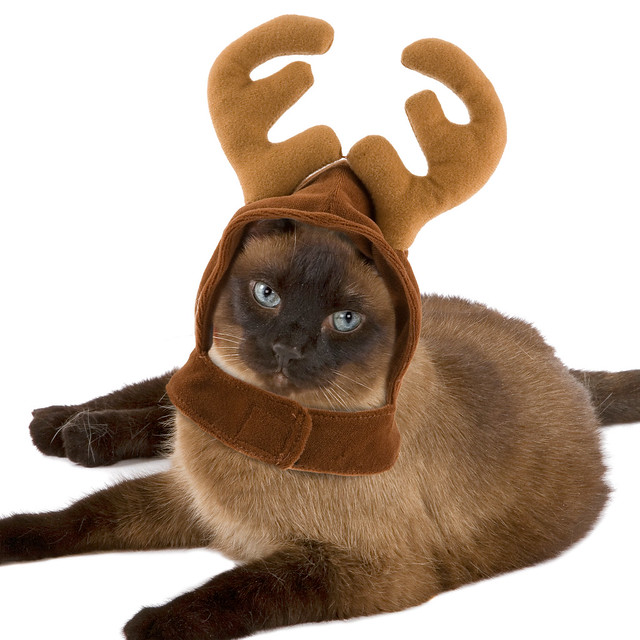 Reindeer Antlers for Cats | Flickr - Photo Sharing!