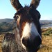 donkey image, photo or clip art