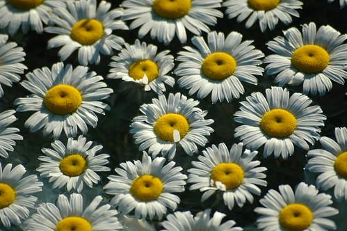 flower macro water