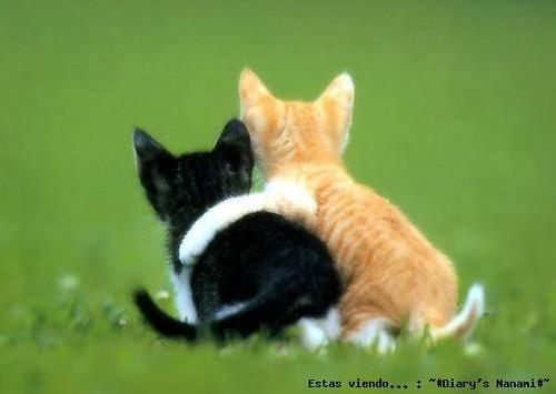64 animales que se abrazan gatitos abrazados tierno