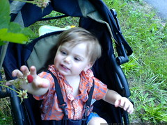 picking a ripe thimbleberry from his seat in the jog…