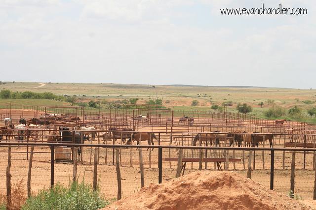 6666 ranch