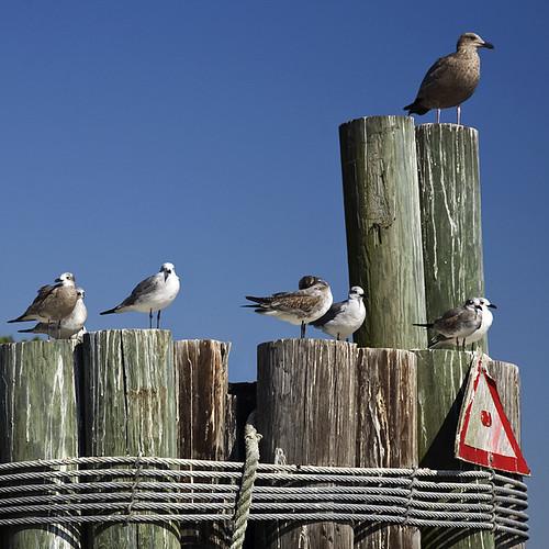 blue sky seagulls water birds sign ferry museum nc waterfront wwii gray navy bluesky pilings battleship capefearriver peachofashot smörgåsbord
