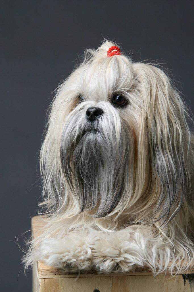 Best Dog Knot Creampie
