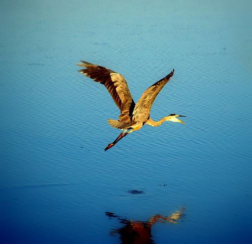 ontario canada heron sunrise searchthebest olympus e3 takeoff southshore haybay bayofquinte napanee abigfave impressedbeauty southshorerd mondocafeclub
