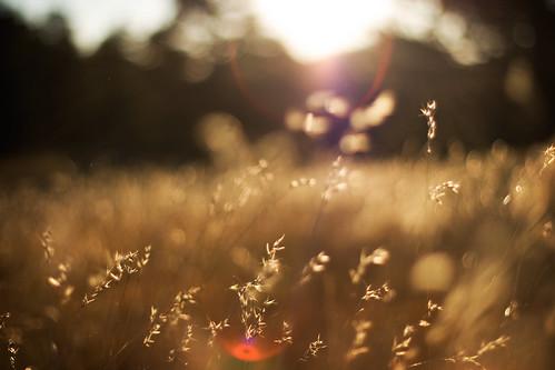morning camping trees sky brown sun mountains grass sunrise canon rebel colorado lensflare 50mmf14 canon50mm canon50mmf14 pingreepark xti 400d