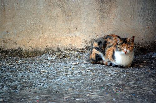El sueño de los gatos