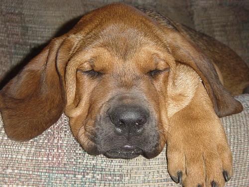 Sooo tired......