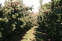 20081012 Apple Picking