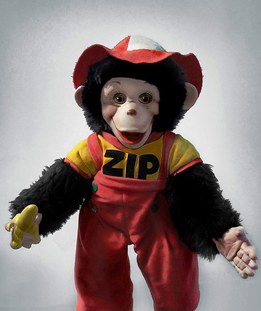 Portrait of Zippy Monkey