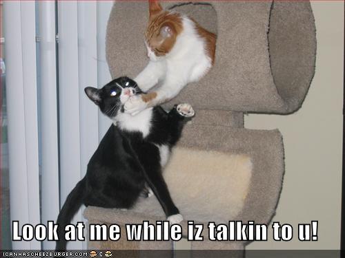 3059936188 ed5f443684 funny cats a 004