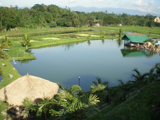Tilapia pond flickr photo sharing for Garden pool tilapia