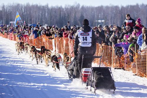 Dallas Seavey Winner of Iditarod 42