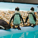 Penguins by MartineBeherPhotography