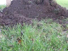 soil, grass, chrysopogon zizanioides, herb,