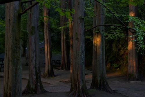 park japan sunrise nikon kanagawa kawasaki 公園 川崎 神奈川 日の出 夜明け 生田緑地 ニコン d80