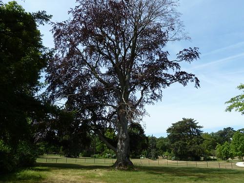Bois de Boulogne and the Jardin dAcclimatation amusement park ~ Jardin D Acclimatation Bois De Boulogne