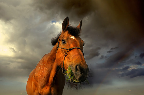 grazing in the storm